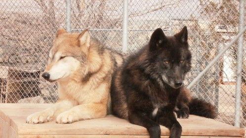 http://www.wolfmountain.com/