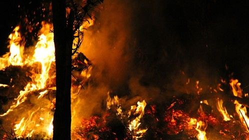 Johor's Burning Forest