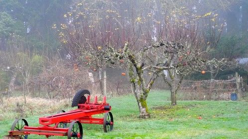 An Apple Tree Says Goodbye To Last Days of Fall in Oregon