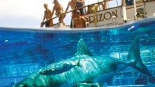 White Sharks in Mexico w sharkdiver.com and Discovery Networks 2008