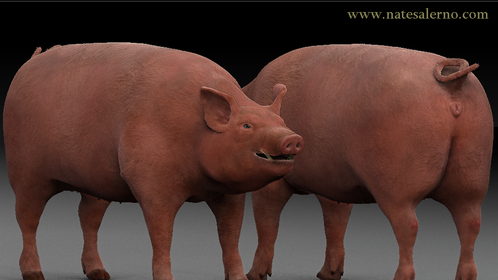 Almost done with the pig model.