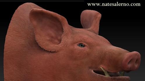 Pig head render.