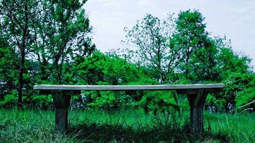 bench & grass
