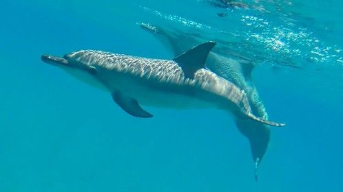 Dolphin friends I met last month off of Lana'i