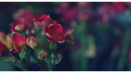 flowers in las vegas