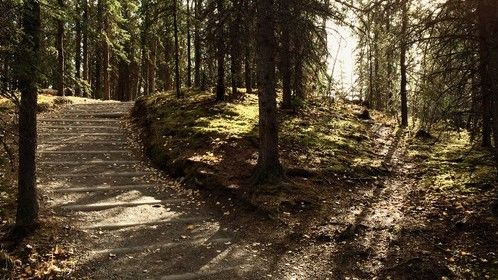 A beautiful photo of a forked path that my wife and I took while hiking in Alaska