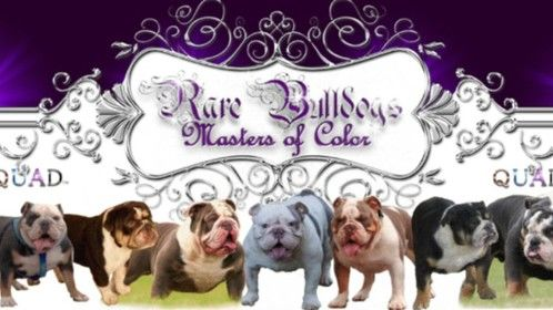 Rare Bulldogs Masters of Color