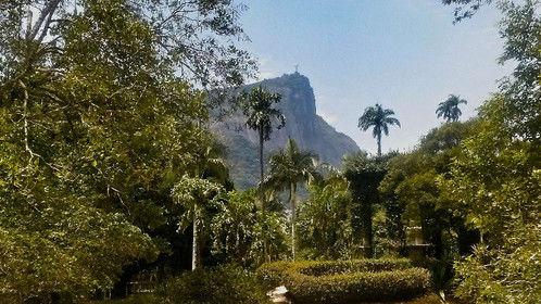 Jardim Botanico, Rio de Janeiro - Brasil Rio de Janeiro's Botanic Garden - Brazil