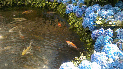 I am a PISCES, two fish moving in two directions. I could not resist snapping this pic.