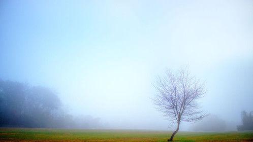 Cherokee Park Tree at Dawn, Knoxville, TN