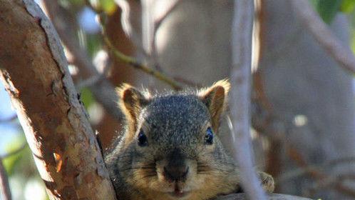 Stunt Squirrel