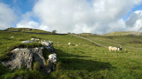 The Yorkshire Dales, and lots of sheep.