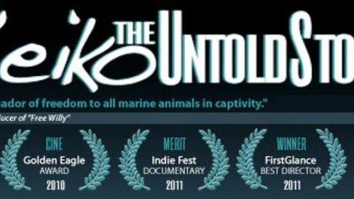 Website Header/ Branding for Documentary Film Festival Run