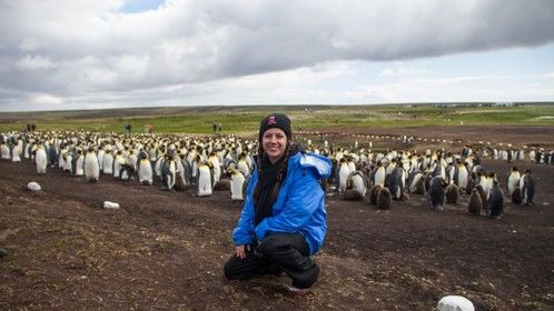 Filming one of the largest King Penguin colonies in the world at Volunteer Point in the Falkland Islands.