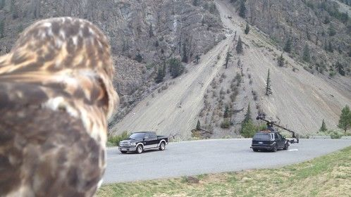 'Mohave' looks on at the beautiful black Dodge RAM and Russian-arm camera-car used during filming for Dodge's 2012 campaign. Directed by Ole Peters.