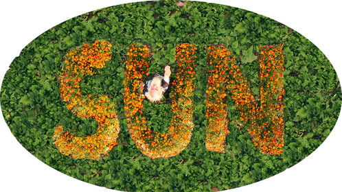 click on pic. one of the logos for the SUN project. green leaf veggies we donated to charity with SUN spelt by Marigolds we also gave away. SUN worm farm garden - everything used was 'waste' except the worms.  I am triggering the camera which is about 5m off the ground.