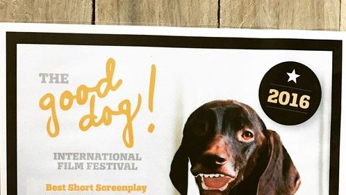 """Won 2016 Best Short Screenplay """"Foiled"""" by @VacenTaylor Family-friendly short. Honoured to be part of The #GoodDogInternationalFilmFestival"""