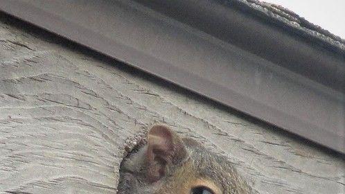 Peekaboo Squirrel...