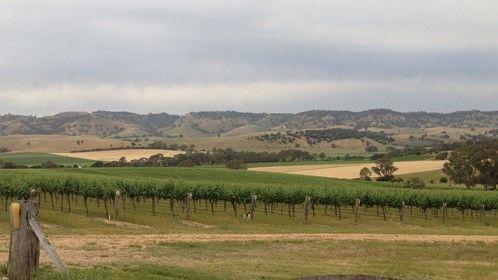 God's Hill Vineyard - My paradise