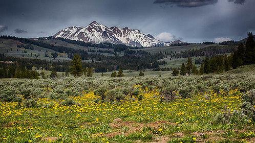 Summer in Yellowstone