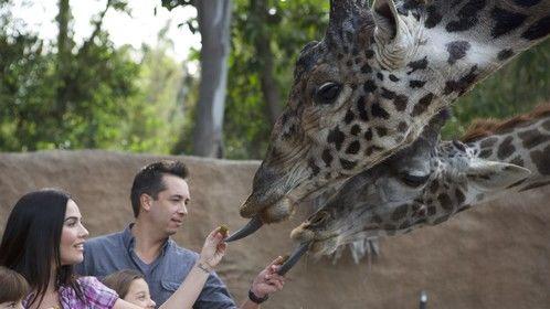 San Diego Zoo video shoot