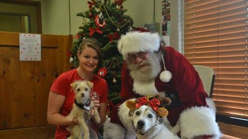 EVEN Santa sometimes goes to the dogs.
