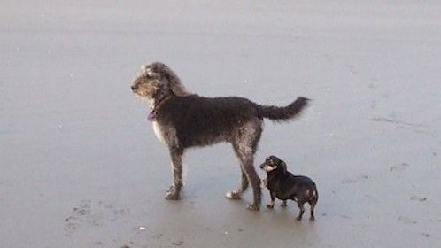 Patrick & Delilah at home on the beach......