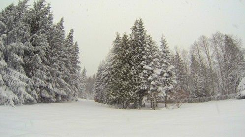 Backyard in the winter.