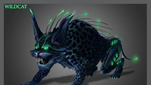wildcat concept