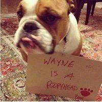 Wayne Han