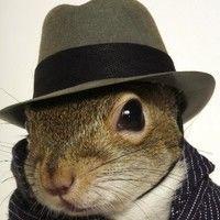 SugarBush Squirrel