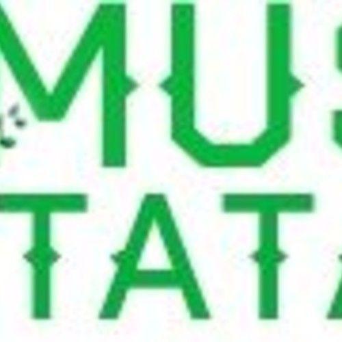 MusicTatafo Chibueze