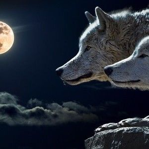 WAYA (Cherokee for wolf)
