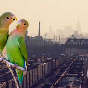 Bronx Lovebirds