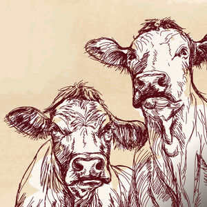 MAD COWS