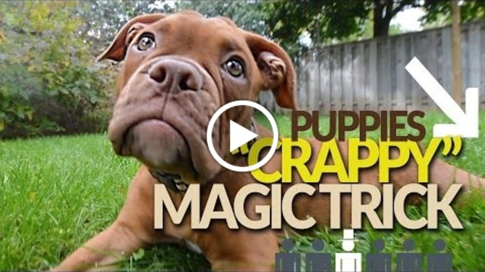 A Magical Puppy. The More He Eats, The More He...
