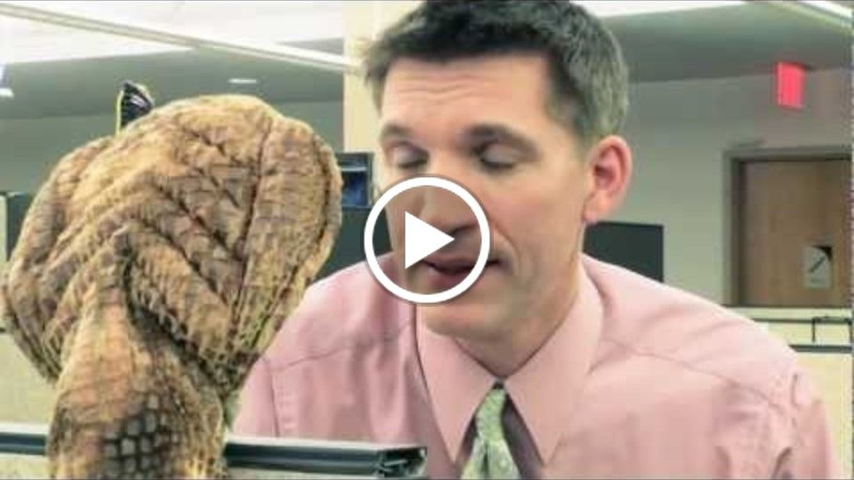 Dennis The Office Cobra: Episode 1 The Promotion