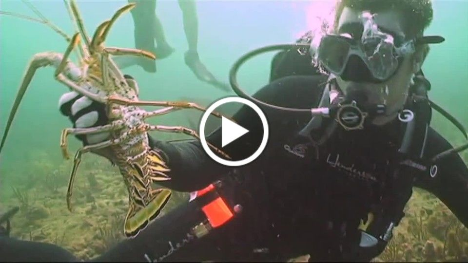 """Dive Charter"" Sizzle Reel"