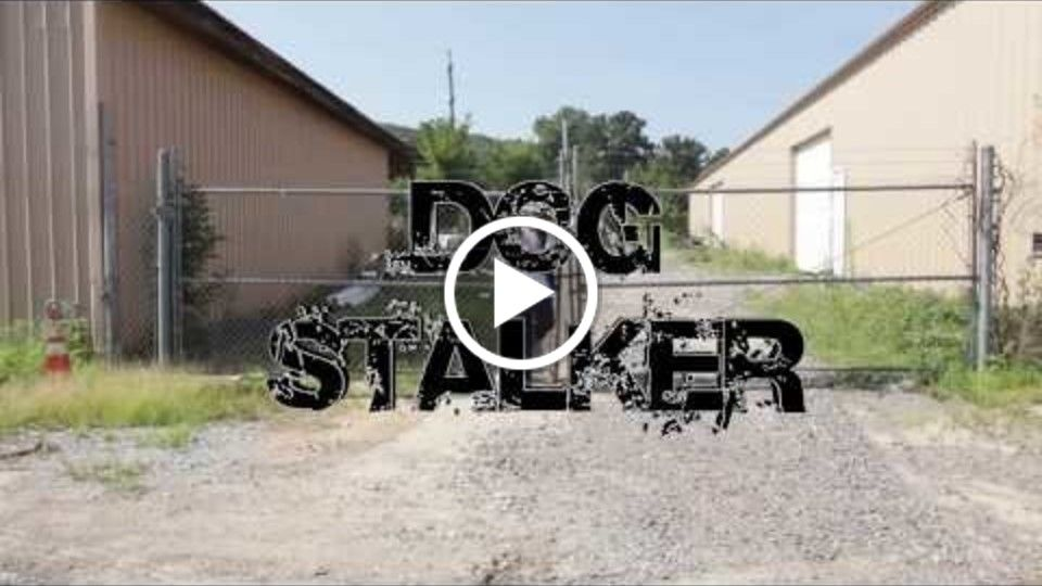 Dog Stalker (Deleted Scene)
