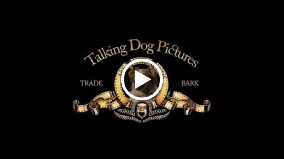 """Dating Fails"" SATO48 2015 -Talking Dog Pictures"
