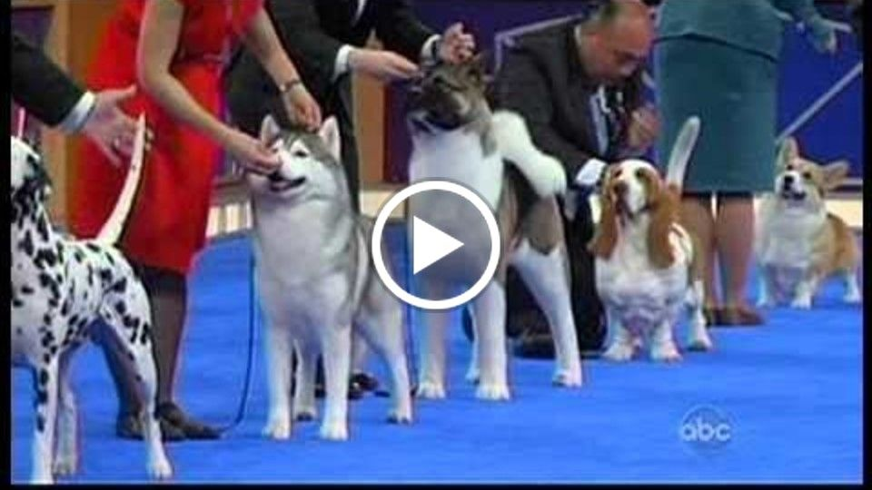 AKC Dog Show World Challenge