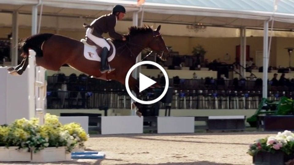 Vita Flex® | The Todd Minikus Approach: Know Your Horse