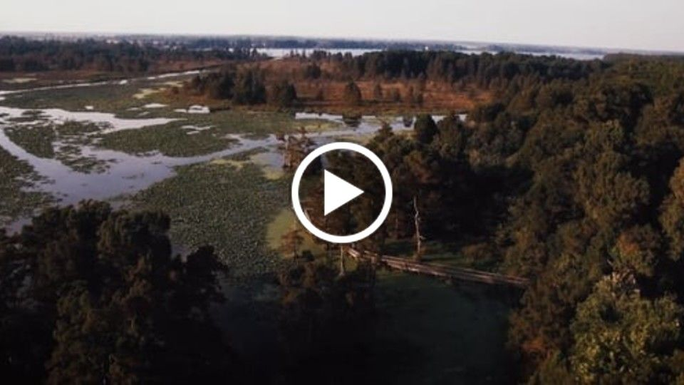 Birds Eye View- Reelfoot Lake (Aerial Reel)