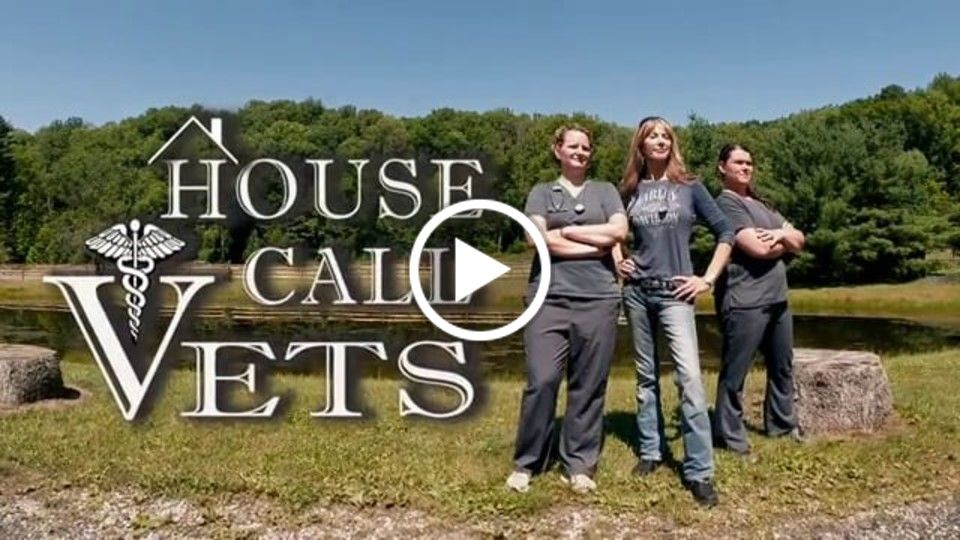 House Call Vets - In This Episode
